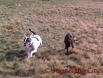 Redbridge-20120314-00035 copy.jpg