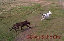 Redbridge-20120314-00075 copy.jpg