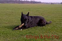 Redbridge-20120314-00098 copy.jpg